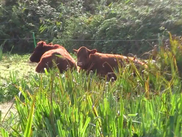 cattle wildlife trust grazing