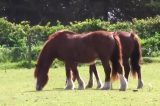 Drivers Urged to Slow Down for Horses