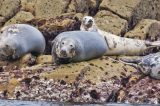 Wildlife Expert Cross Over Seal Racism Claims