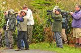 RSPB Offering Guided Tours On Tresco