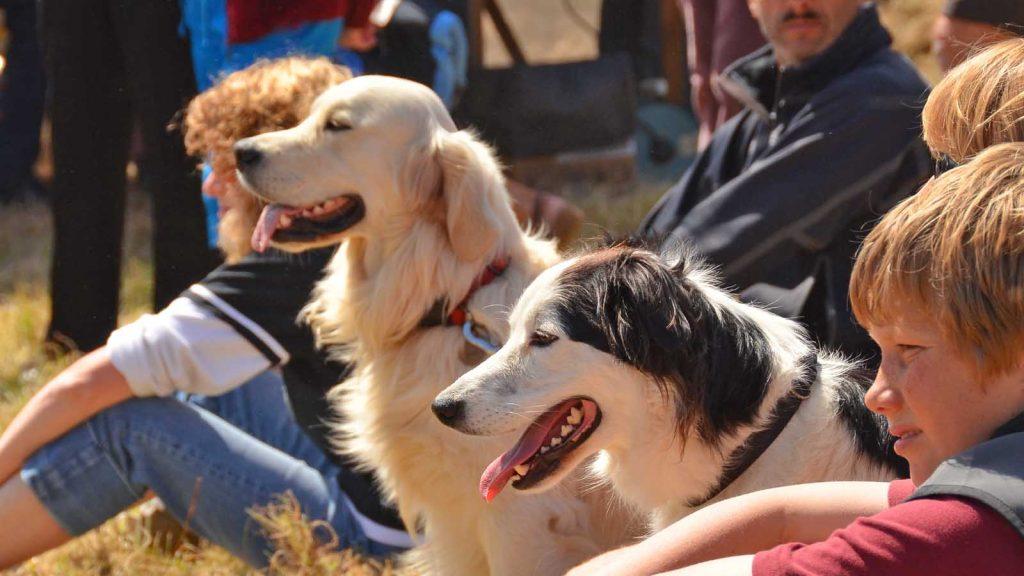 dog show 2013