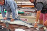 Bumper Year For Marine Wildlife Around Scilly