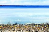 Cotswold Art Lovers To Get Glimpse Of Scilly
