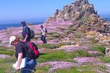 Scilly Is 'Most Significant' Seabird Colony In Southwest