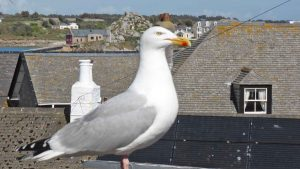 gull in town