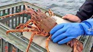 lobster tag 2015
